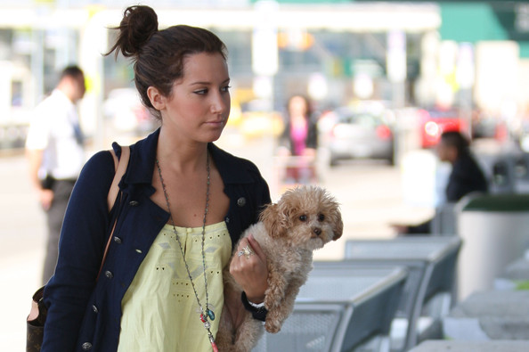 More Pics of Ashley Tisdale Dog Carrier Duffle (4 of 6) - Ashley Tisdale Lookbook - StyleBistro