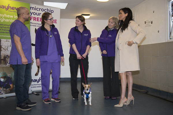 More Pics of Meghan Markle Chain Strap Bag (4 of 46) - Shoulder Bags Lookbook - StyleBistro [event,team,meghan,minnie,jack russell,role,mayhew,sussex,duchess,duchess of sussex visits mayhew,animal welfare charity,visit]