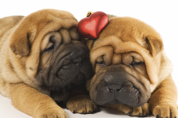 5 Ways to Celebrate The True Love of Your Life (Your Pet) This Valentine's Day