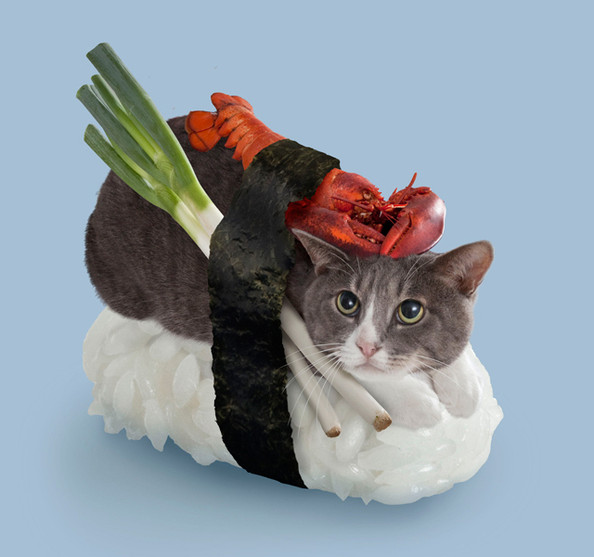 Let's All Take a Moment to Look at These Sushi Cats