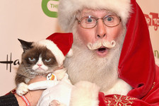 Grumpy Cat Seems to Have Dominated 2015's Hollywood Christmas Parade