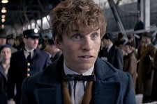 What Percent Newt Scamander Are You?
